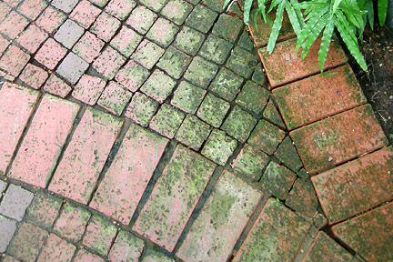 How Do I Remove Moss Amp Algae From Bricks Amp Paving Clay